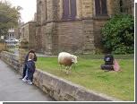 Барану Берти запретили пастись около церкви