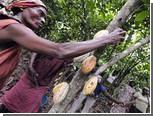 Кот-д'Ивуар запретил экспорт какао и кофе