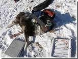 Обвиняемые в охоте на архаров не признали вины