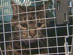 Кот стал причиной задержки рейса канадской авиакомпании