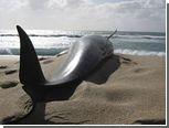 Дельфины вновь выбросились на берег Новой Зеландии
