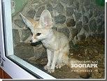 Посетителям екатеринбургского зоопарка разрешили гладить животных