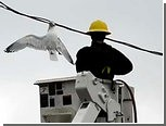 Канадский электромонтер спас застрявшую в проводах чайку