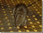 Нью-йоркцы выберут самую страшную крысу в метро
