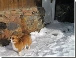 Считавшийся погибшим под лавиной пес вернулся к хозяйке