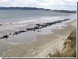 В Новой Зеландии умертвили три десятка выбросившихся на сушу гринд