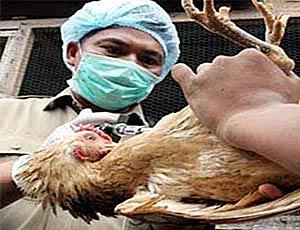 В Китае умер второй больной птичьим гриппом