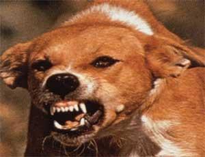 На Южном Урале бешеная собака покусала около 20 человек / Все пострадавшие госпитализированы