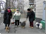 В Киеве запретили продавать собак и кошек из-за бешенства