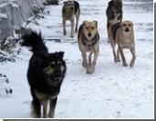 Трагедия в Ростовской области: бродячие собаки загрызли ребенка