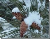 Гидрометцентр Приднестровья предупредил о резком похолодании