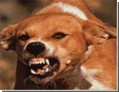 В Аше 28 жителей получают вакцину против бешенства / 21 человек пострадал от укусов больной собаки, остальные контактировали с ее щенками