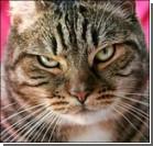 В Новой Зеландии призывают запретить кошек