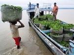В Индии работники чайной плантации съели работодателя