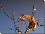 Петрозаводские пожарные сняли с дерева подростка с кошкой