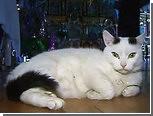 Из красноярского монастыря выселили кота
