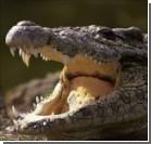 Украинские таможенники нашли в автомобиле метрового крокодила