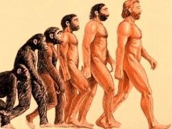 Естественный отбор — слабое звено теории эволюции