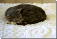 Американец продал кровать с котом внутри