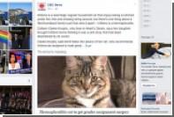 Канадские ветеринары сделают кошку-гермафродита котом