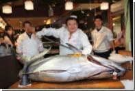 Голубого тунца продали за 37 тысяч долларов