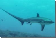 Ученые впервые сфотографировали роды акулы в океане