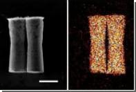 Микроскопические машины впервые отправились в путешествие по организму животных