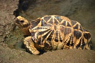 Похититель редких черепах сдал себя в Facebook