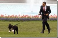 Обама определился со способом ношения штанов собаками