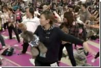 Любители йоги с собаками установили мировой рекорд во время флэшмоба