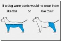 Пользователи Twitter задумались о способе ношения штанов собаками