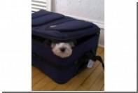 Япония выслала самовольно прилетевшего с хозяином гонконгского пса