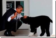 Представившийся сыном Монро и Кеннеди собирался украсть собаку Обамы