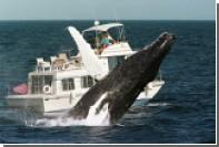 Японское пассажирское судно столкнулось с китом у берегов Южной Кореи