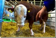 В Калифорнии похитили элитную бычью сперму на 50 тысяч долларов
