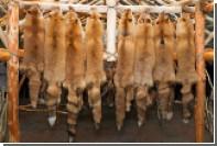 В Китае поймали контрабандистов с лисьими шкурами на 134 миллиона долларов