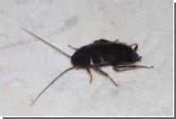 Ученые посчитали количество живущих в домах у людей насекомых