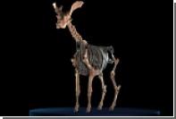 Названо крупнейшее жвачное животное Земли