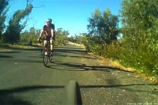 В Австралии кенгуру перепрыгнул велосипедиста