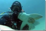 Австралийский дайвер подружился с акулой