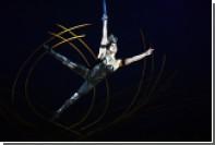 Общественный совет Минкульта призвал ограничить работу иностранных цирков