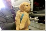 В Нью-Йорке перевернулся фургон со 103 щенками