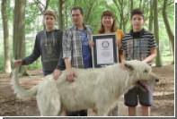 В Бельгии пес побил мировой рекорд на самый длинный хвост