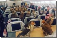 Саудовский принц посадил 80 соколов в салон пассажирского самолета