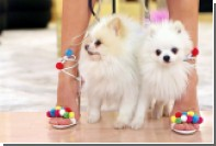 Aquazzura сняла видео про детей и собак