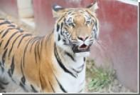 Жителям ОАЭ запретили держать дома диких зверей