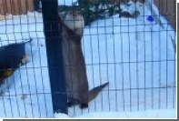 В челябинском зоопарке выдра станцевала под балалайку