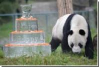 Гигантская панда напала на китайского ученого
