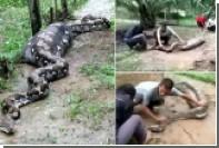 В Малайзии гигантский питон проглотил двух коз