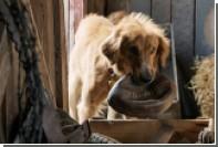 PETA призвала бойкотировать фильм «Собачья жизнь» за издевательства над псом